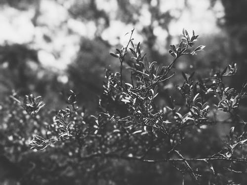 Grayscale Photo of Tree Branch