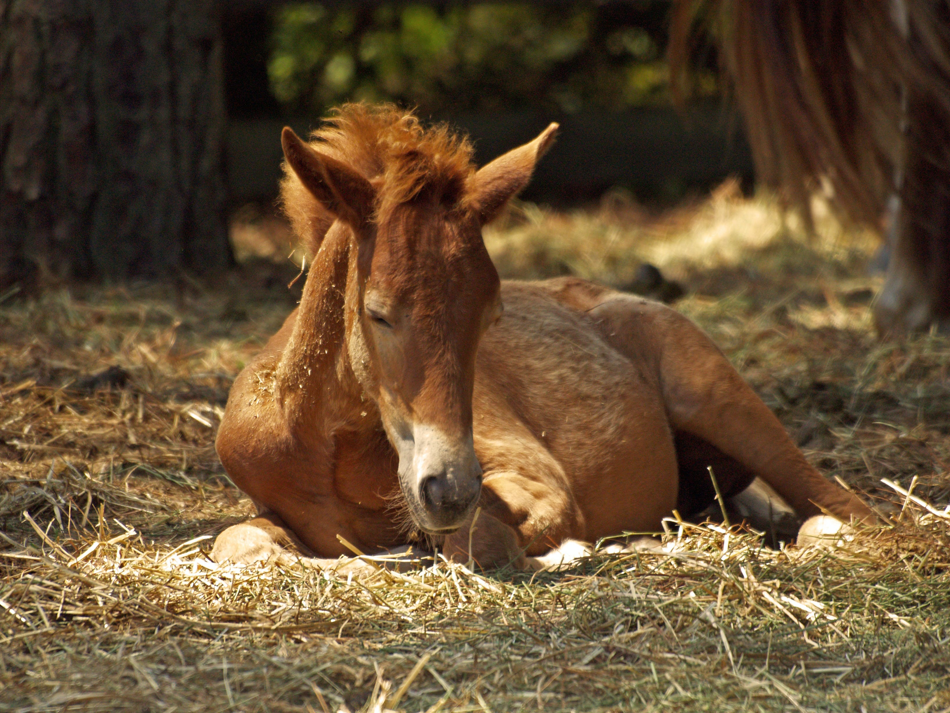 Brown Horse Lying on Ground