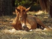 animal, farm, horses