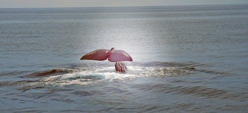 Free stock photo of animals, fins, sea