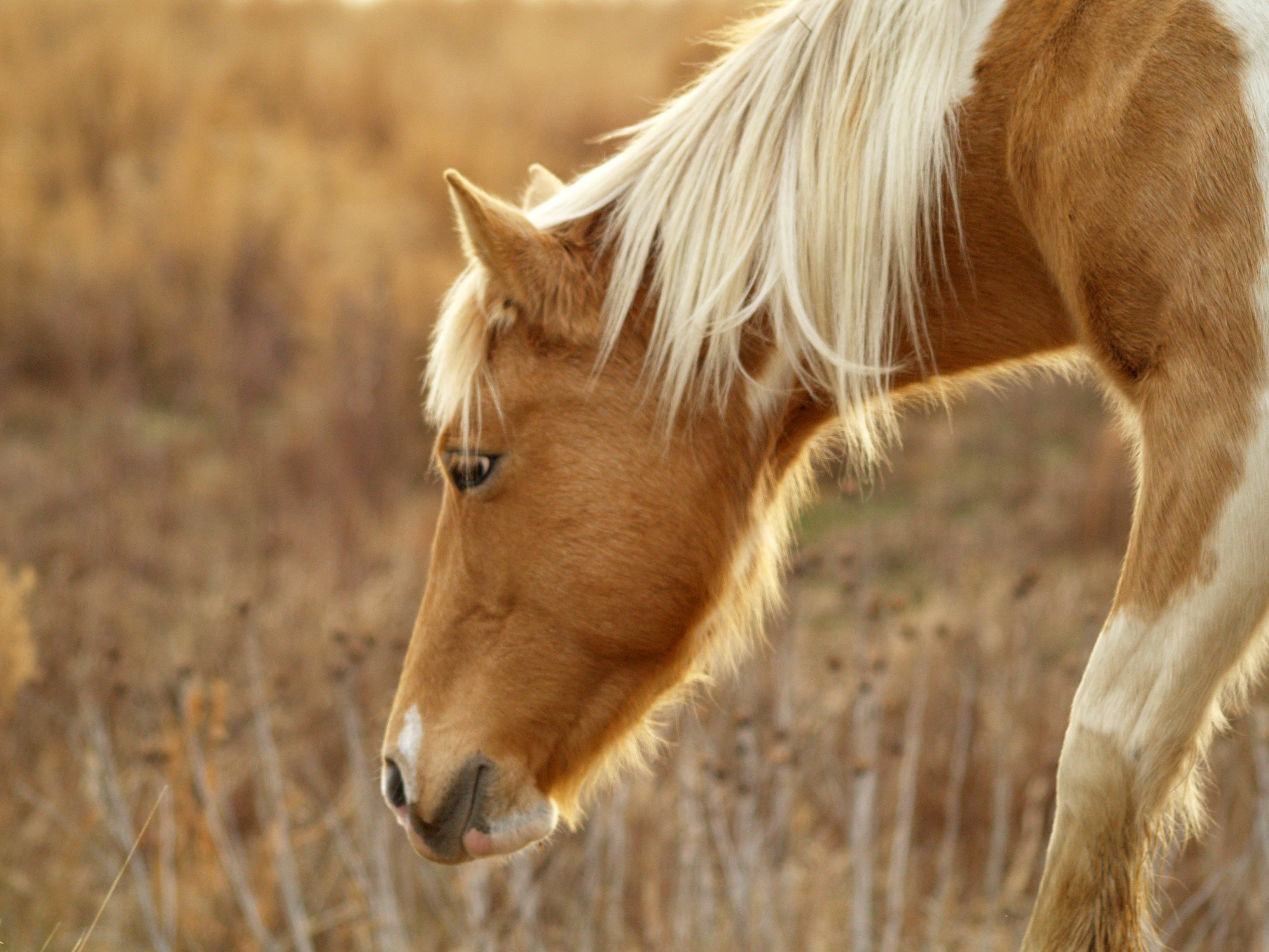 Selective Focus Photography of Brown Horse on Brown Grass