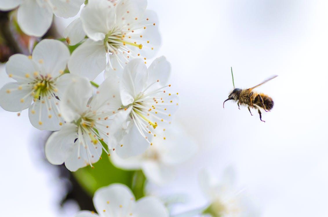 bie, blomst, blomster