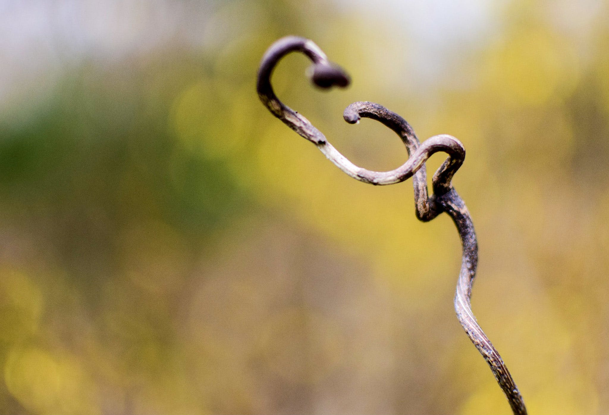 Free stock photo of abstract, backgrounds, branch