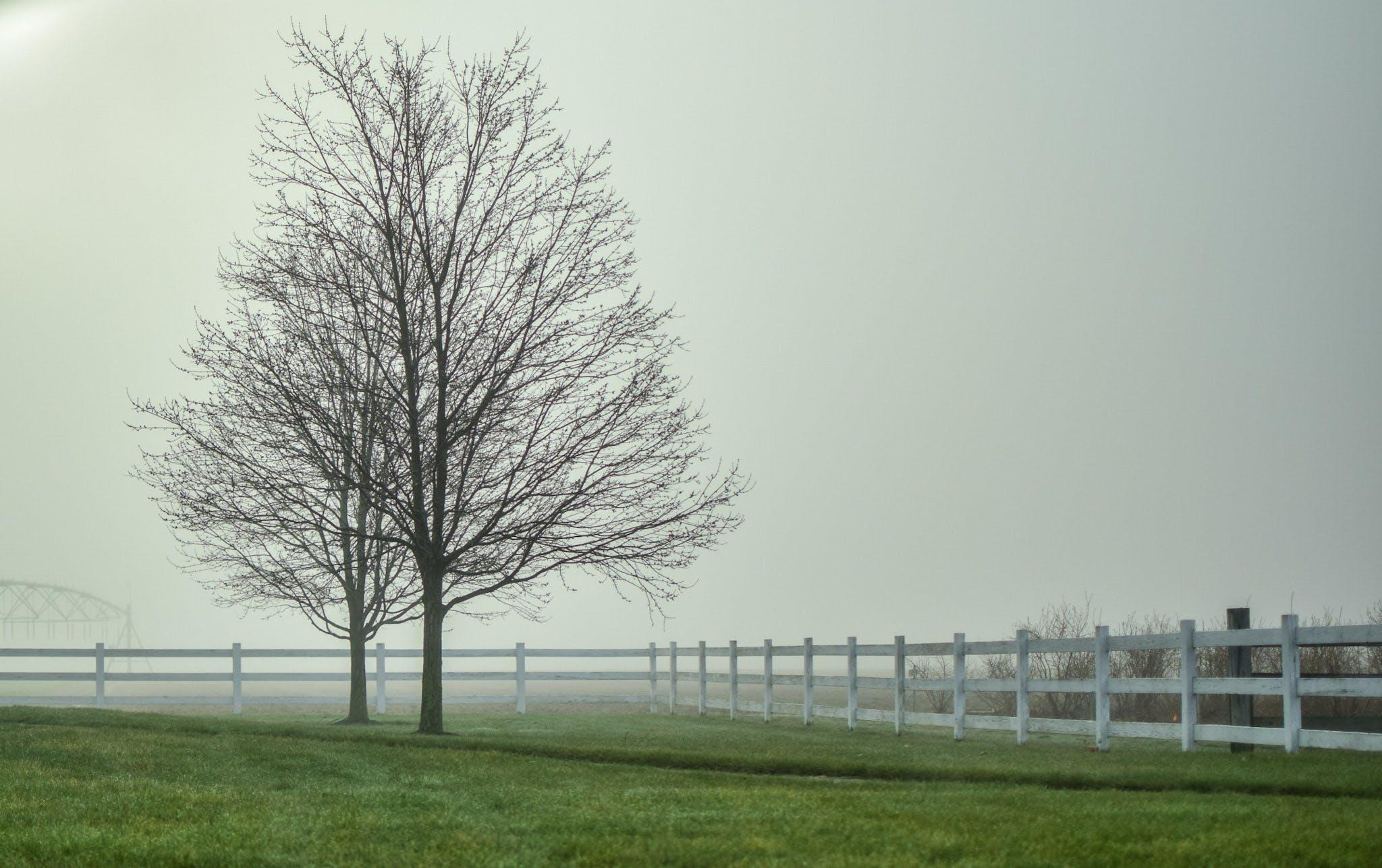 Free stock photo of farm, fence, landscape, trees