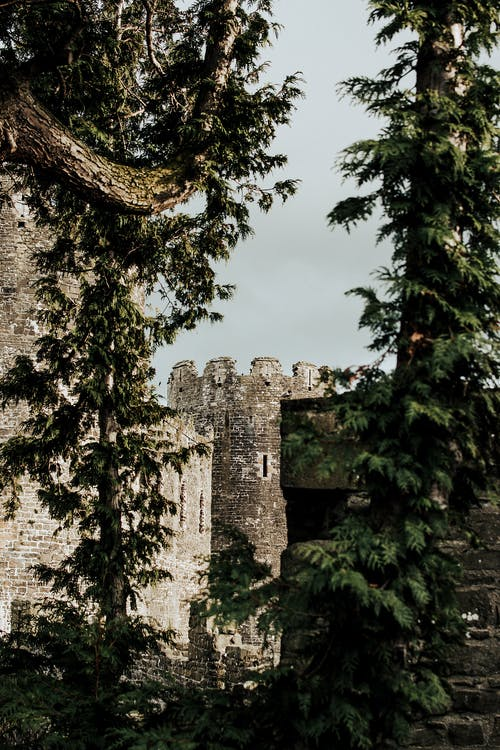Old castle among trees in summer day