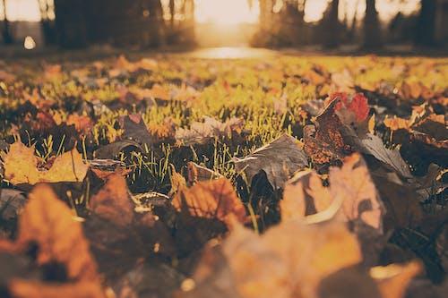 Foto stok gratis daun daun, hutan, padang rumput