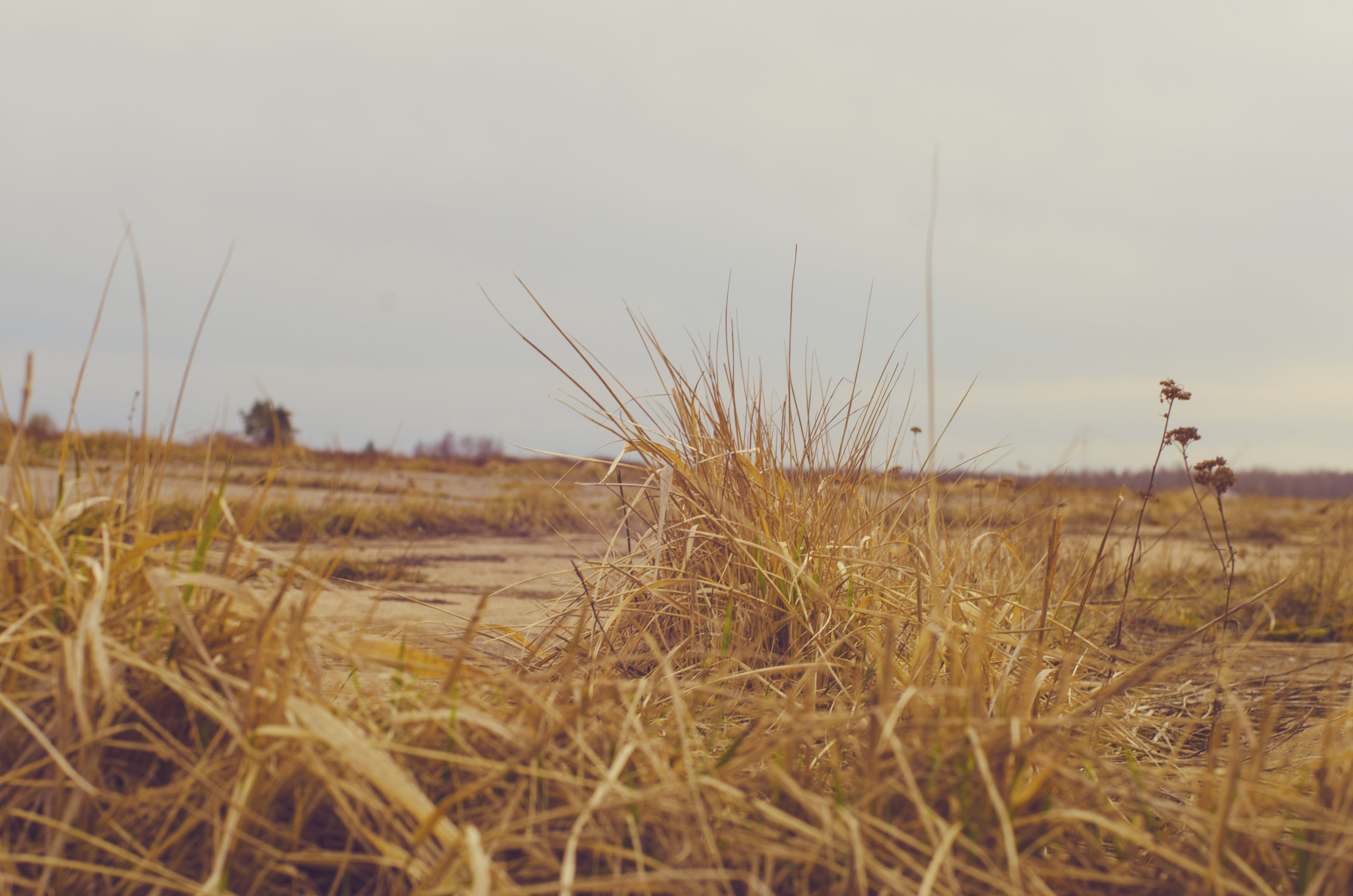Free stock photo of background, dry grass, landscape, yellow grass