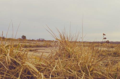 Foto profissional grátis de conhecimento, grama amarela, grama seca, paisagem
