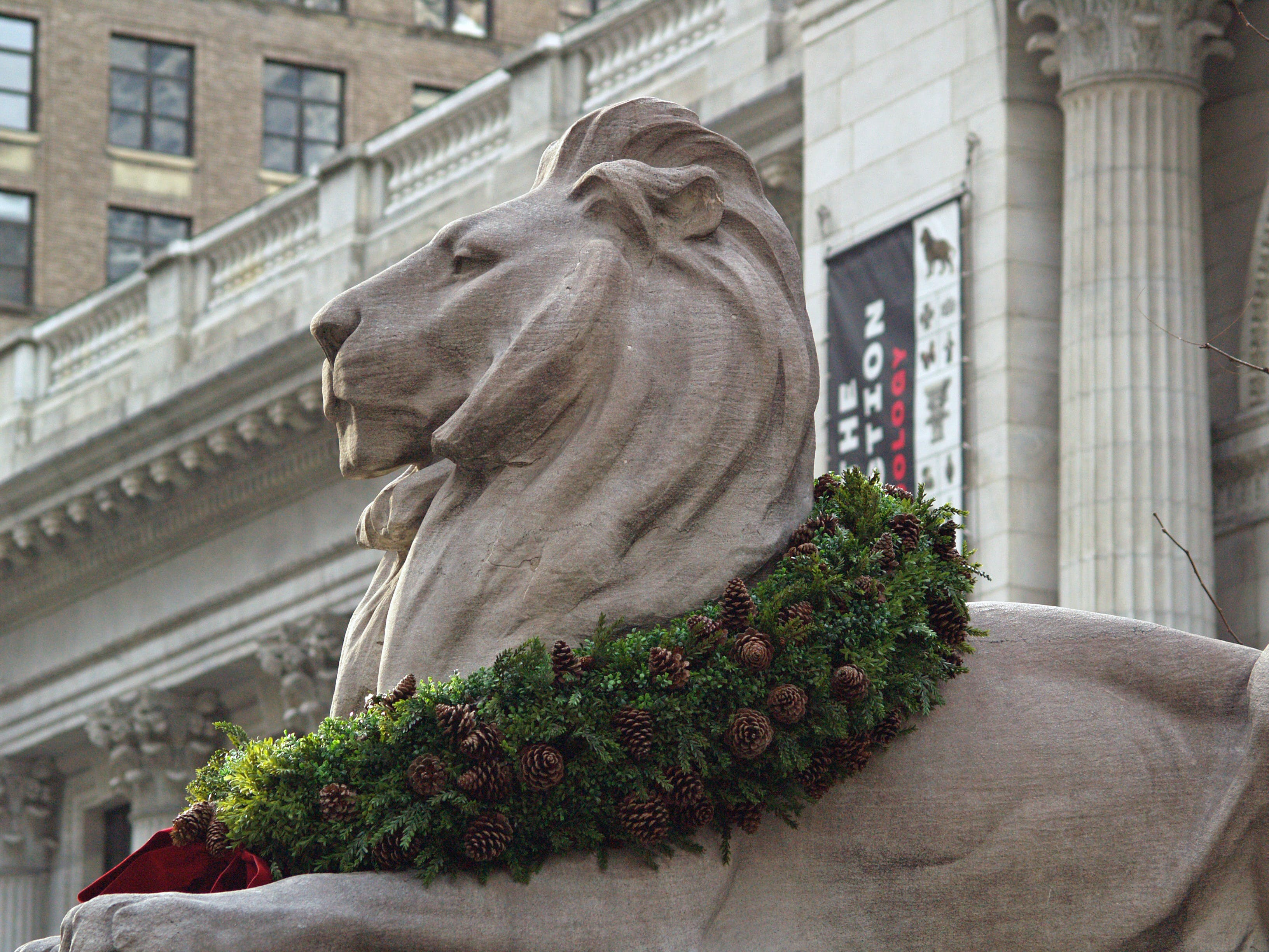 Free stock photo of buildings, lion, new york, New York Public Library