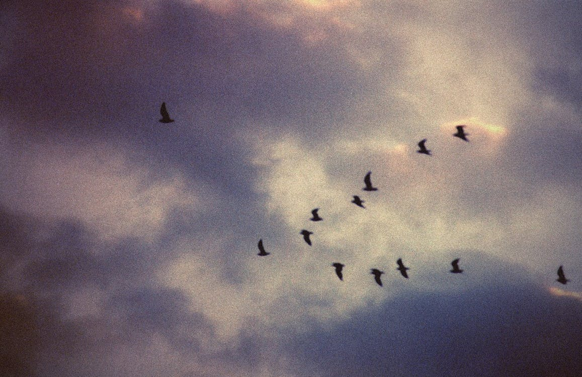 Silhouette Of Birds Flying Under Gray Clouds