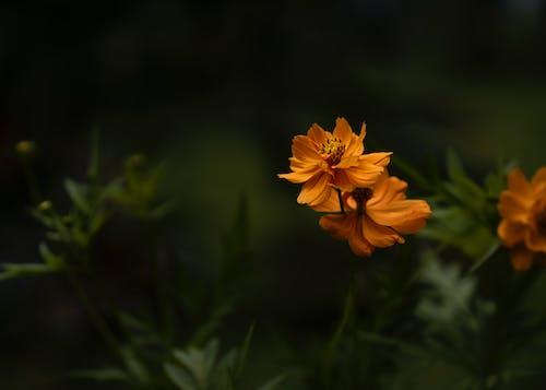 Gratis lagerfoto af blomst, have, lukke op, natur
