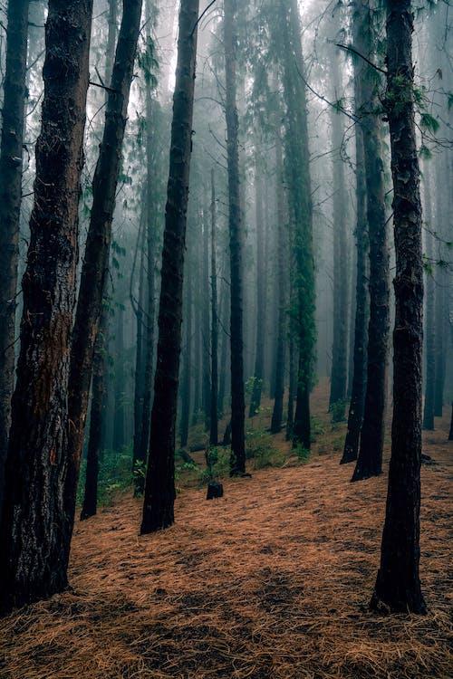 Kostnadsfri bild av dimma, dimmig, dimmigt landskap, höstfärger