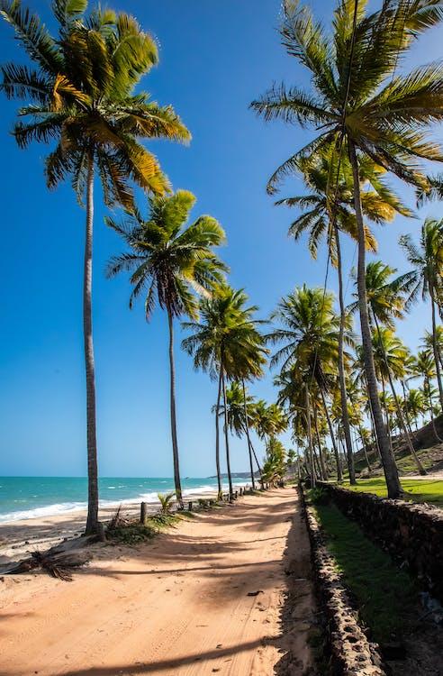 Palm Trees on Beach Shore