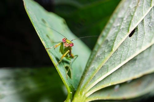 Základová fotografie zdarma na téma fotografování hmyzem, fotografování zvířat, hloubka ostrosti, hmyz