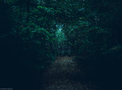 Free stock photo of 4k wallpaper, folklore, forest