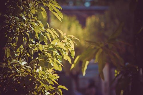 ağaç yaprakları, bokeh, genç yapraklar içeren Ücretsiz stok fotoğraf