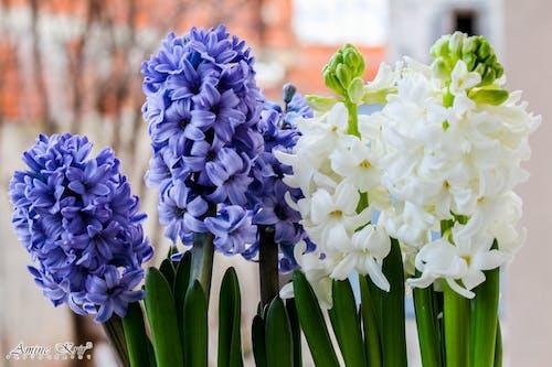 Foto stok gratis bunga biru, bunga-bunga indah, hijau, manis sekali