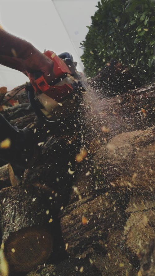 Free stock photo of chainsaw, chopped wood, dust, particles