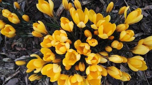 Základová fotografie zdarma na téma barva, botanický, fotka zvysokého úhlu, hřiště