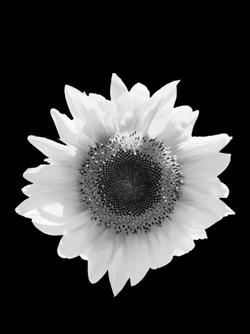 White and Black Flower in Bloom