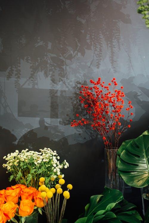Gratis lagerfoto af arrangement, blomster, butik