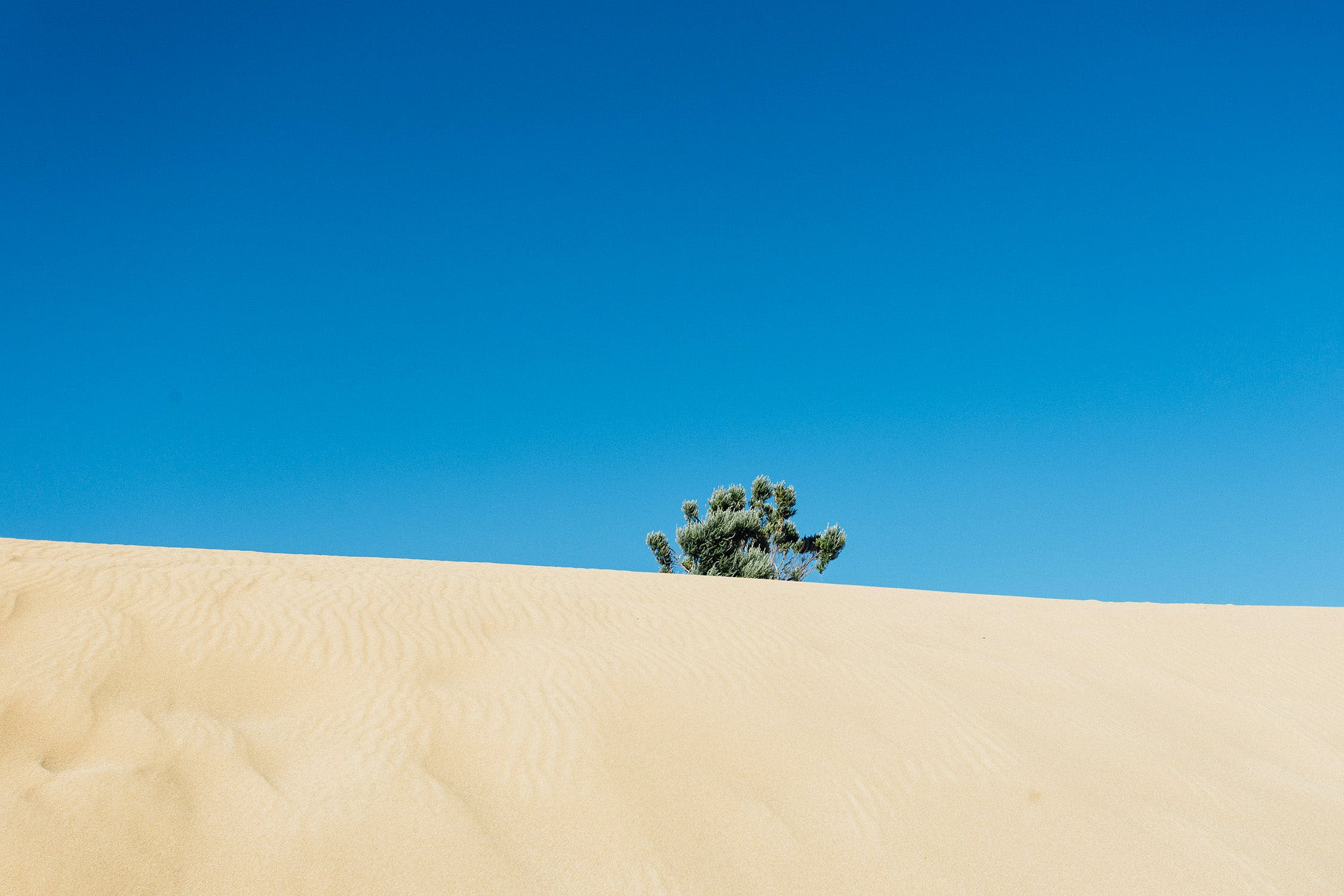 Green Leafed Tree in the Middle of Desert