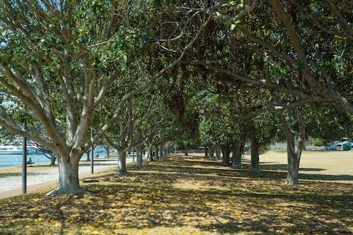 Gratis lagerfoto af landskab, park, træer