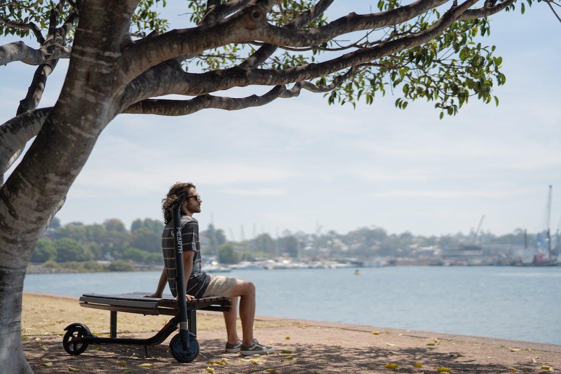 Бесплатное стоковое фото с берег, дерево, мужчина