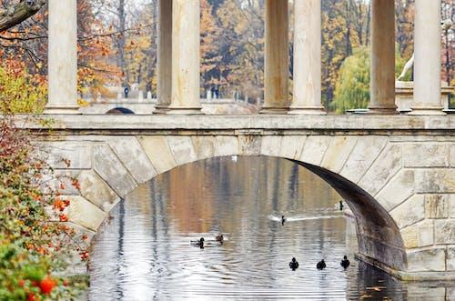 公園, 列, 天性, 放鬆 的 免費圖庫相片
