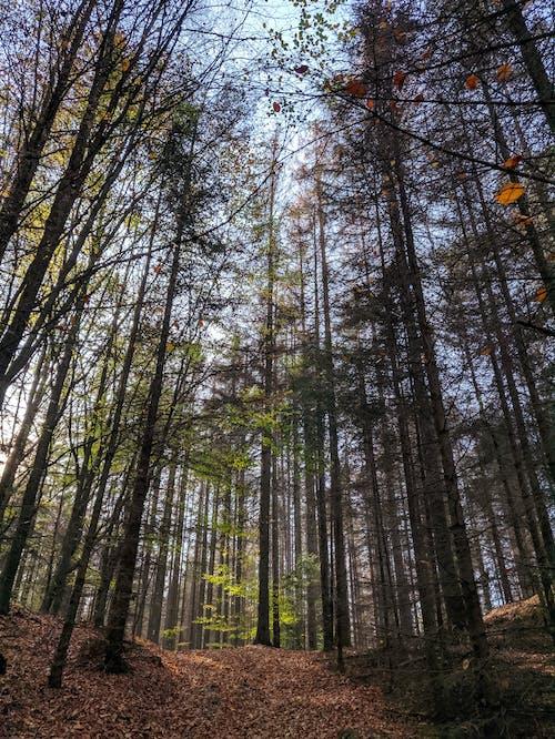 高大的樹木,在森林裡的照片