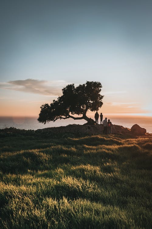 Photo of People Standing Near Tree During Golden Hour