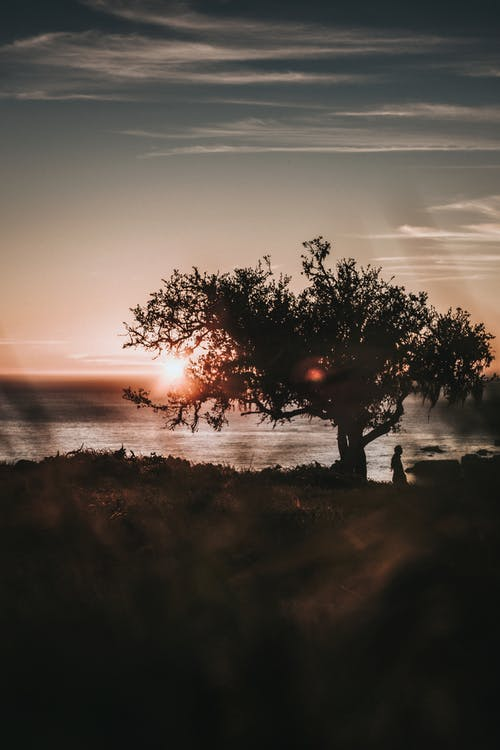 Silhouette of Photo of Person Standing Near Tree during Sunset