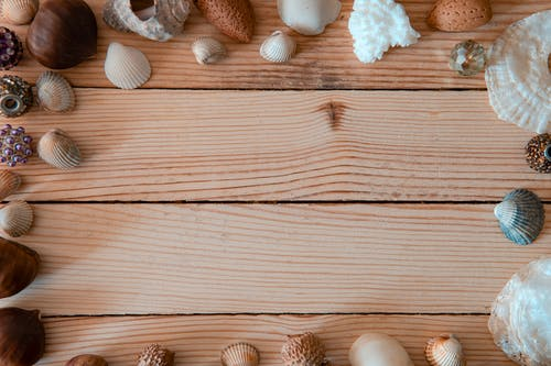 Photo of Wooden Surface With Seashells