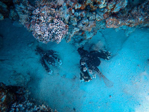 Fishes and coral reefs in depth of blue sea