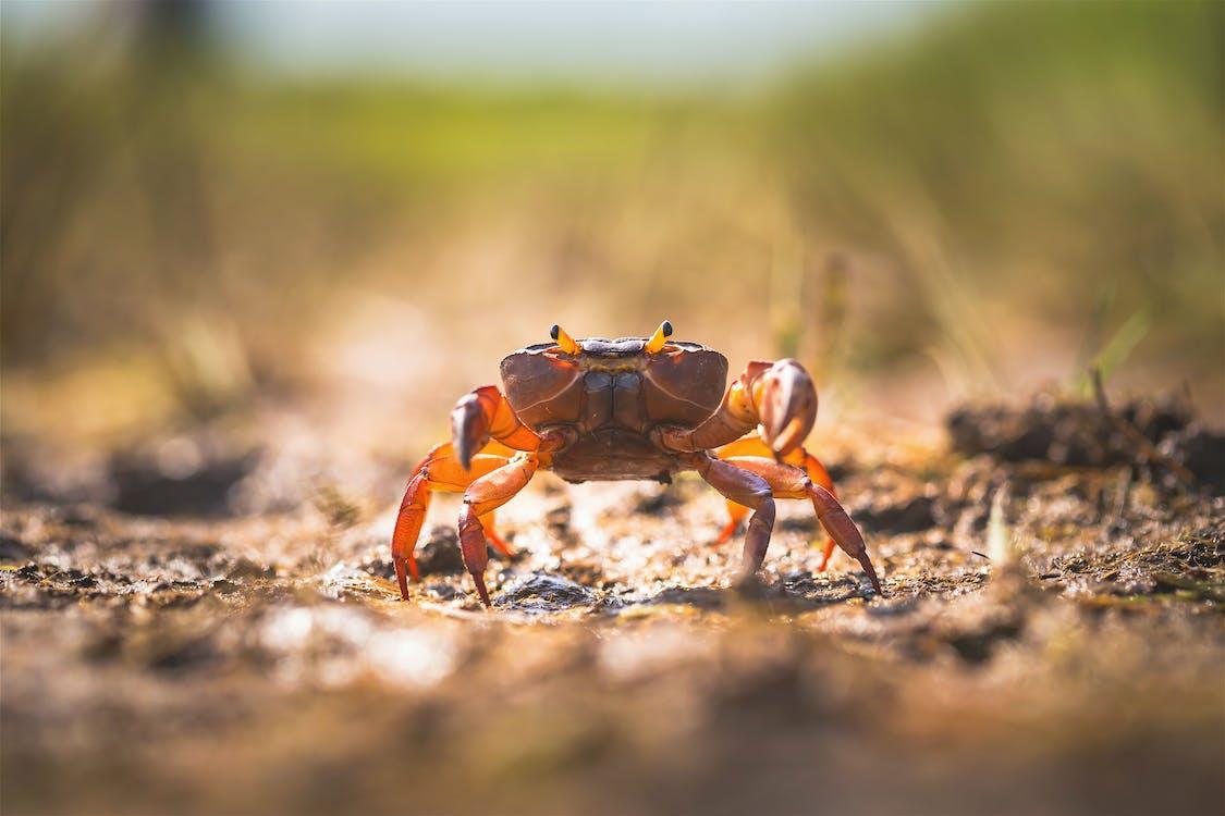 Photo of Crab on Ground