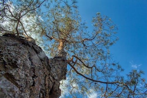 Free stock photo of arbre, ciel, madagascar