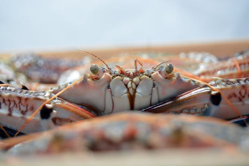 Close-Up Photo of Crab