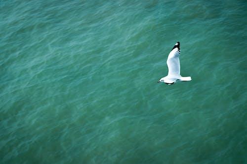 Free stock photo of alone bird, bangladesh, bird