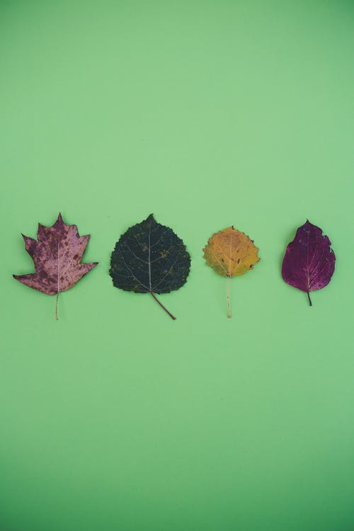Top view of fresh and dried delicate tree leaves placed in row on green surface