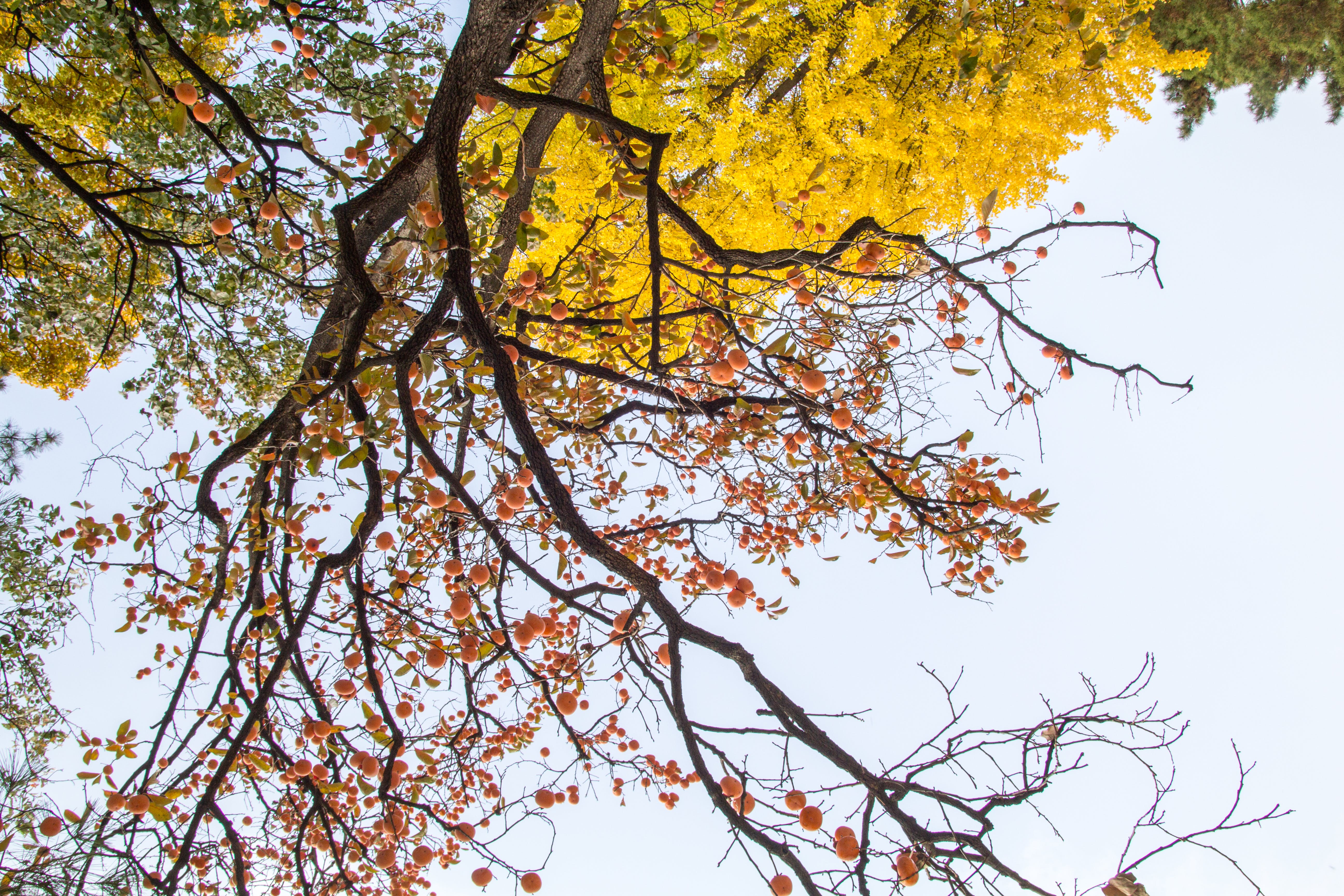 Brown and Yellow Leafed Trees