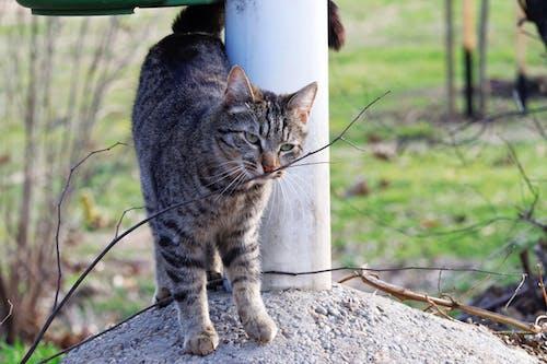 動物, 天性, 寵物, 戶外 的 免費圖庫相片