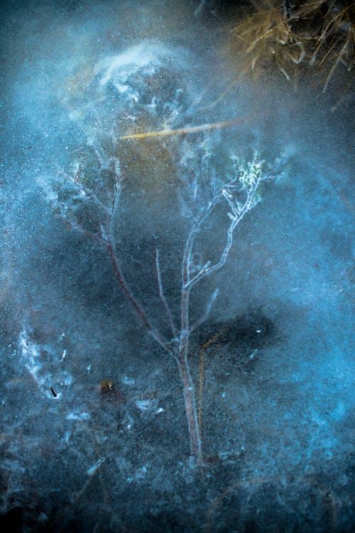 Foto profissional grátis de congelado, naturezas arte, rio congelado