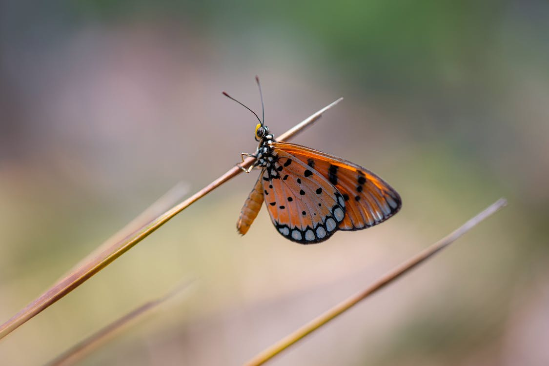 Brown Black and White Butterfly Perched on Brown Stem in Close Up Photography
