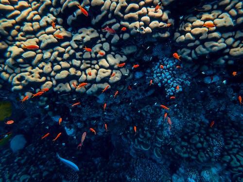 balık, balıklar, berrak, çevre içeren Ücretsiz stok fotoğraf