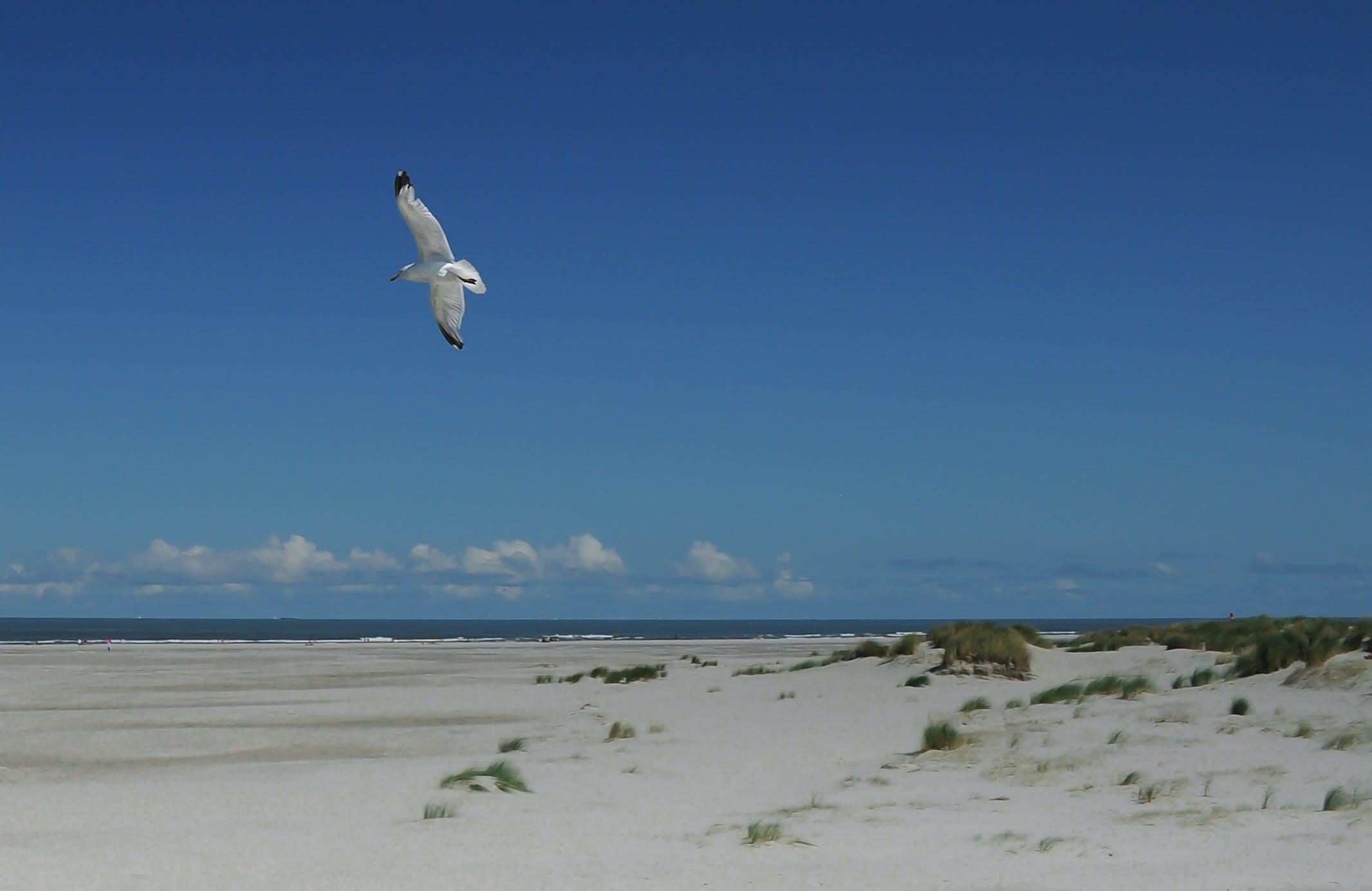 Kostenloses Stock Foto zu vogel, fliegen, strand, möwe