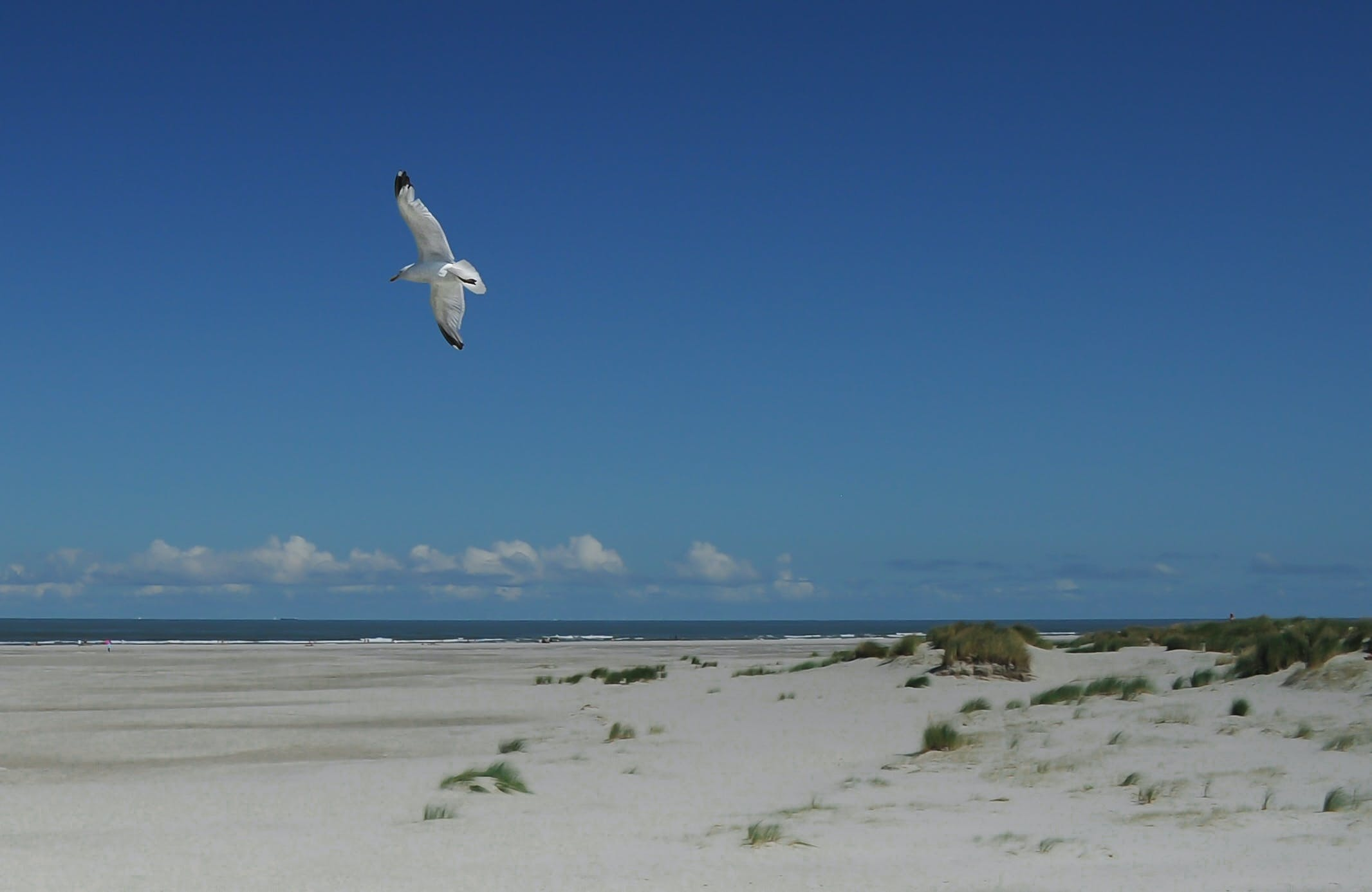beach, bird, flying