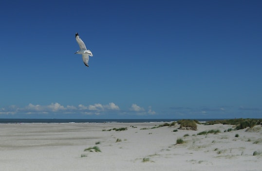 Free stock photo of bird, flying, beach, seagull