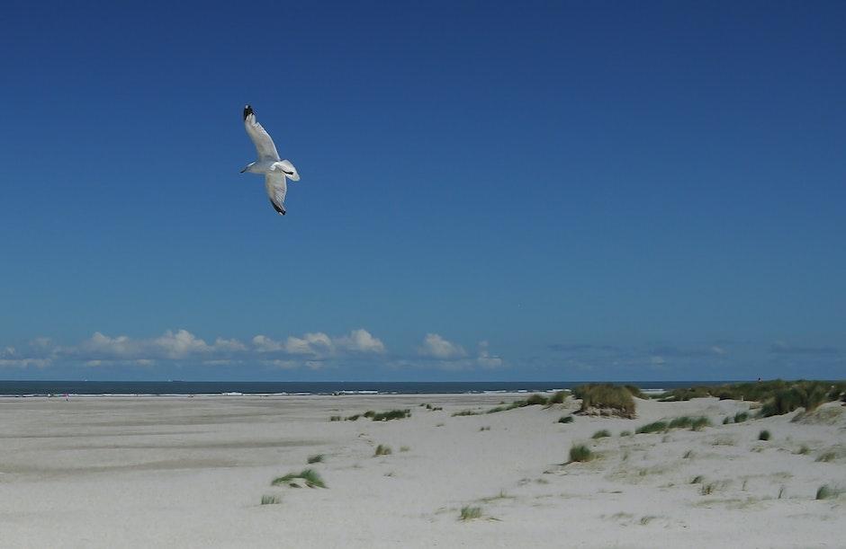 beach, bird, flying
