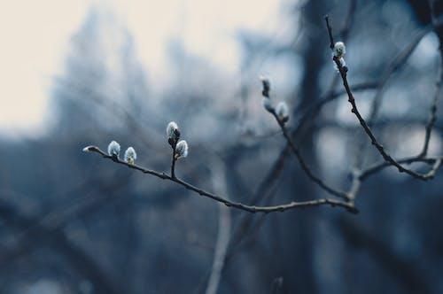 Foto profissional grátis de árvore, borrão, botões de flores, close