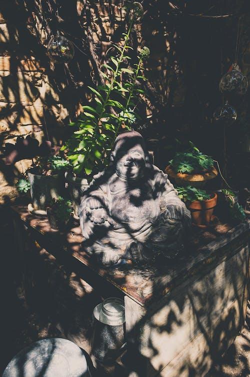 Photos gratuites de bouddha, centrales, jardin, lumière du soleil